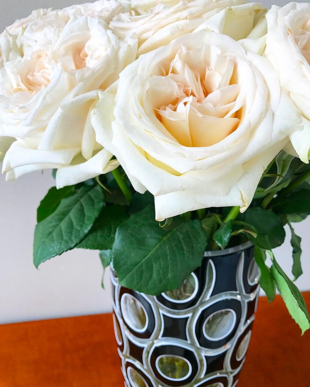 White Roses Like Home